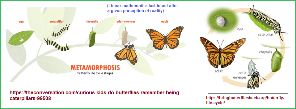 Comparing stages of a butterfly's life to mathematical equations