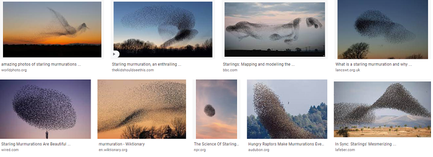 Starling murmations collection 1