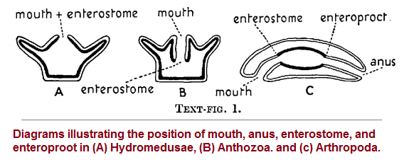 Mouth and Anus placements