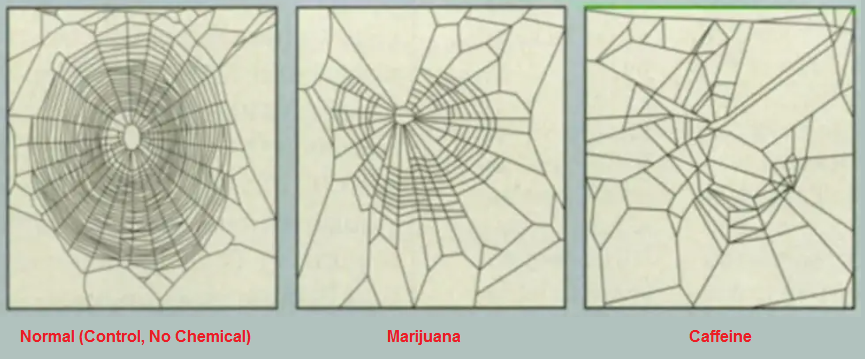 How drugs can affect a spider's ability to make a web