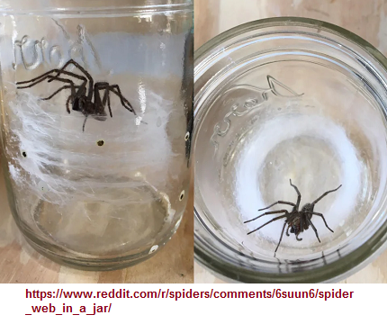 spider and its web in a jar