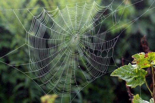 Spider web image 1