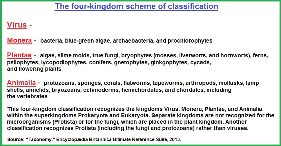 4 Kingdom classification system (197K)