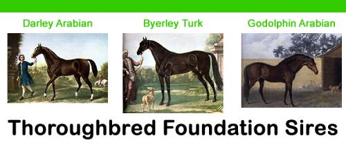 Three Foundation Stallions