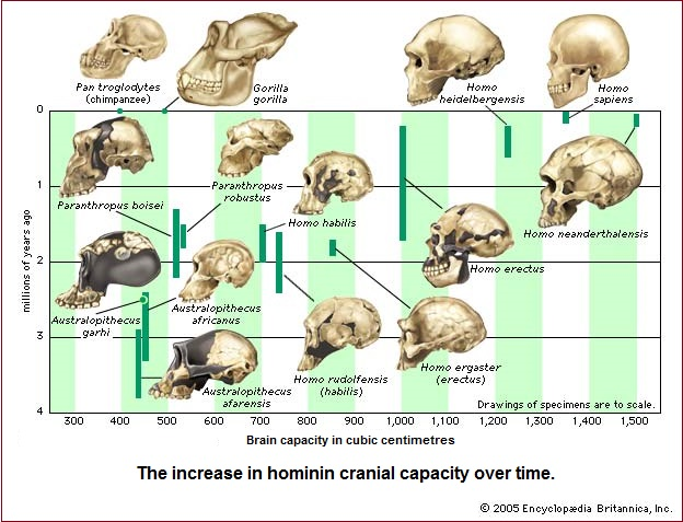 Human cranial capacity (109K)