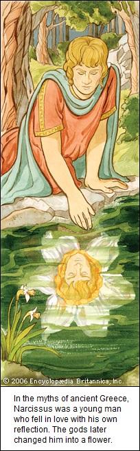 Narcissus (84K)