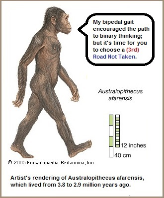 australopithecus afarensis with binary gait (48K)