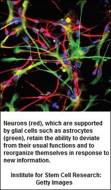 neurons (54K)