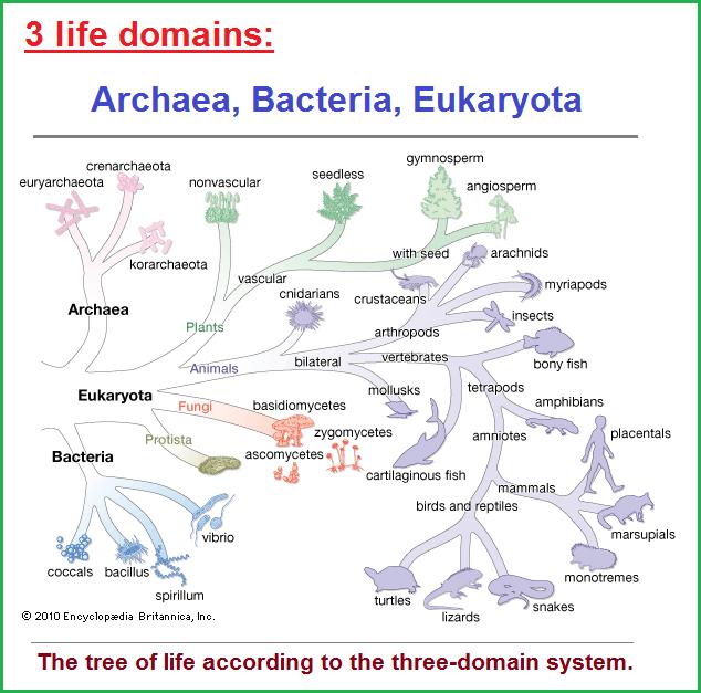 3 life domains