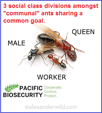 Ant Colony Communism