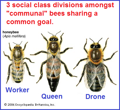Bee colony Communism