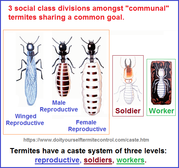 Termite Colony Communism