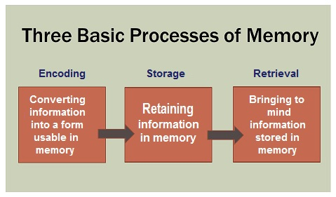 Three Basic Processes of Memory