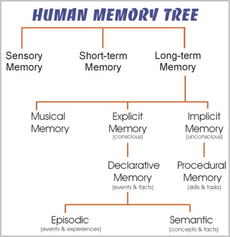 Memory tree with examples
