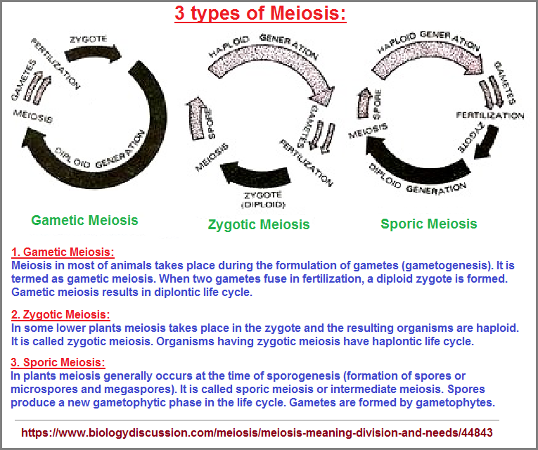 3 types of Meiosis