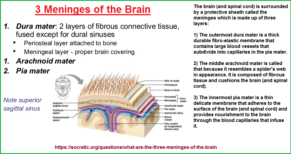 3 brain coverings