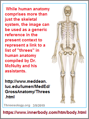 Link to Dr. McNulty's list of threes in Gross Anatomy