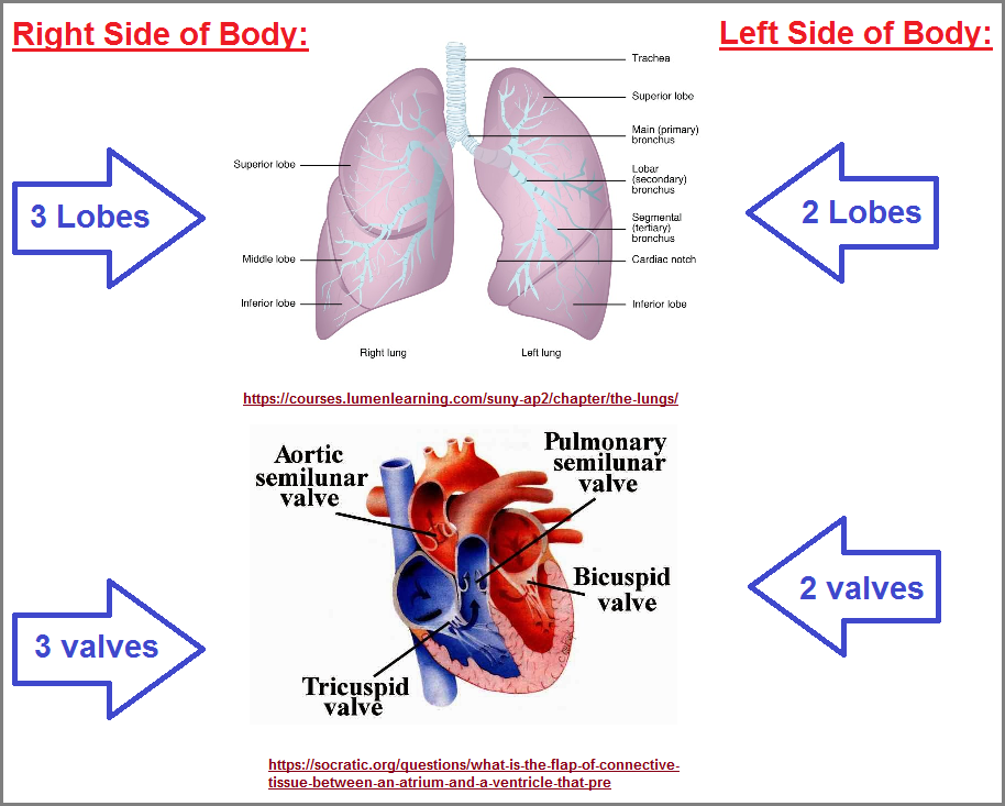 The 2s and 3s of the heart and lungs