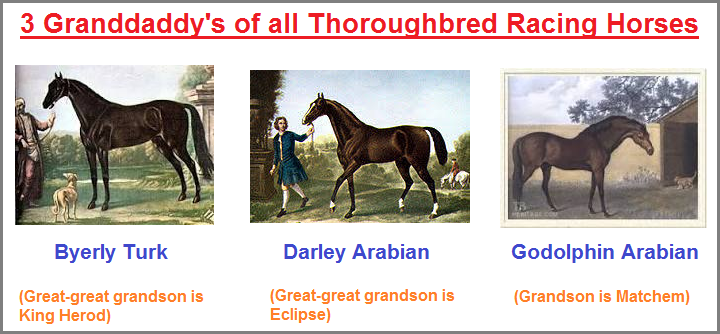 3 Granddaddys of all Thoroughbreds