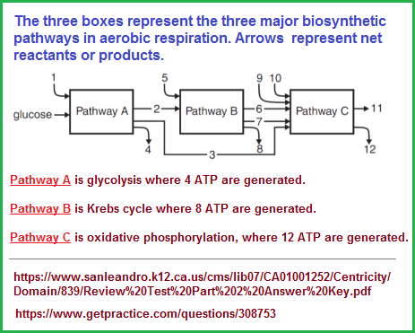 3 major biosynthetic pathways