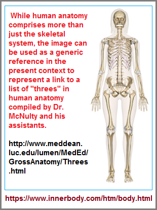 Image is a link to Dr. McNulty's list of anatomical threes page
