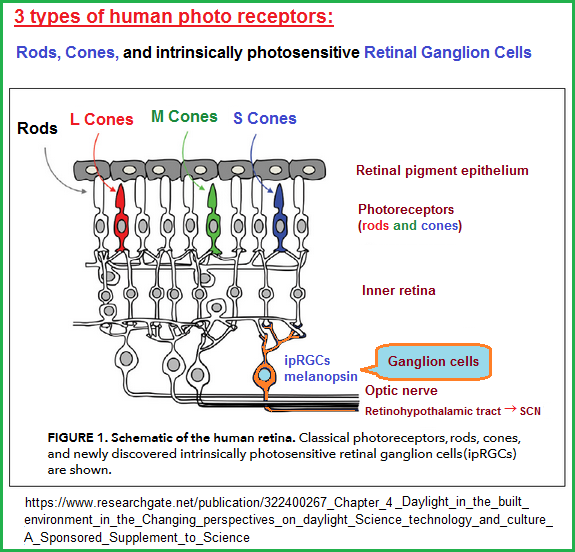 3 types of photoreceptors