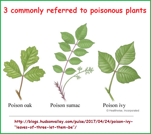 3 poisonous plants
