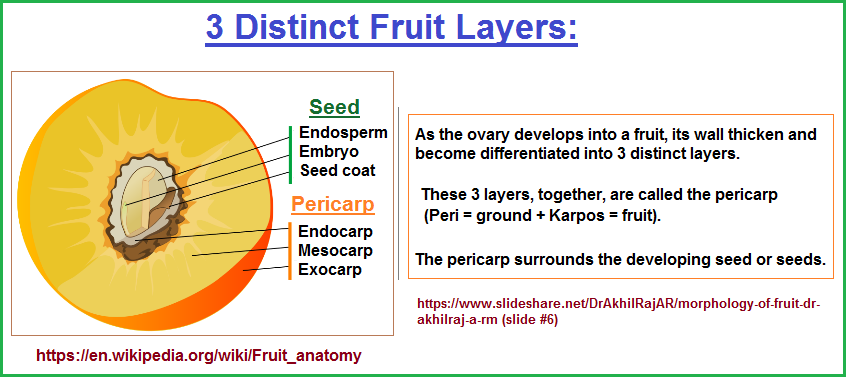 3 distinct fruit layers