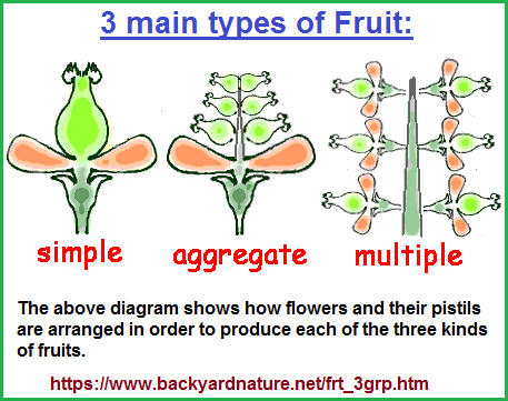 3 main types of fruit
