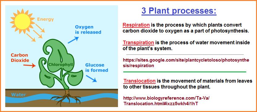 3 plant processes image 1
