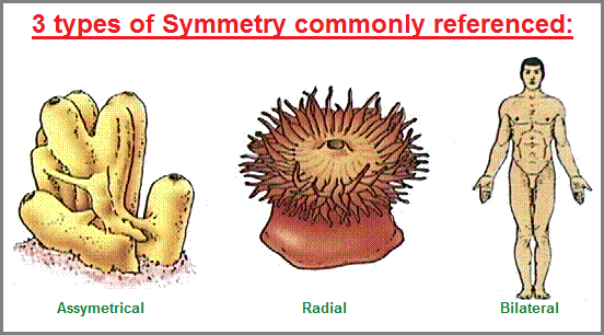 3 types of symmetry