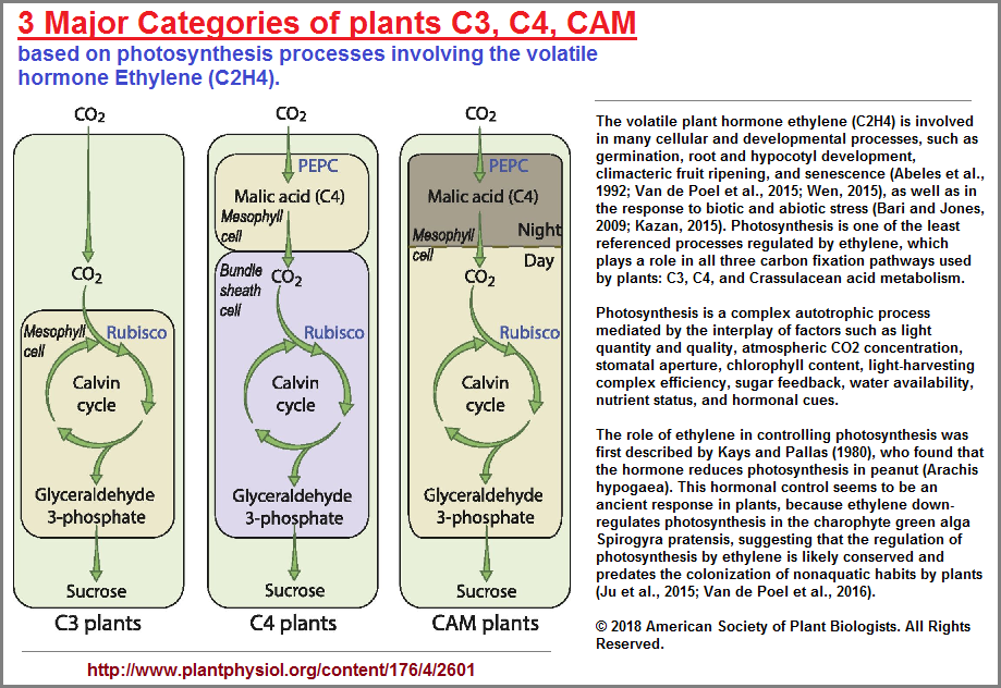 3 major categories of plants
