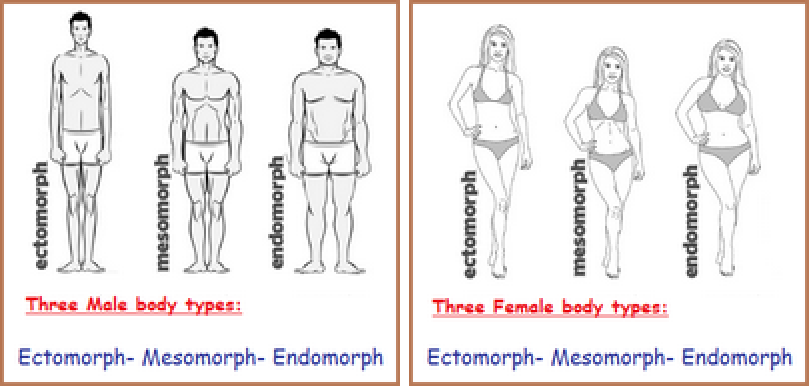 Three male and female body plans called types