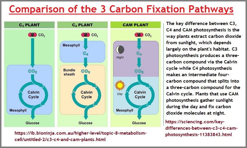 3 plant types of carbon fixation