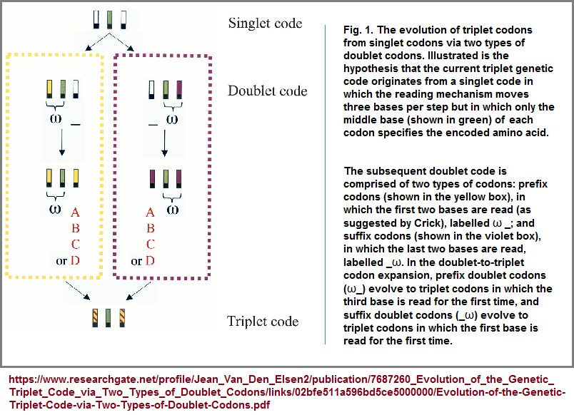 Hypothesis for the evolution of the triplet code