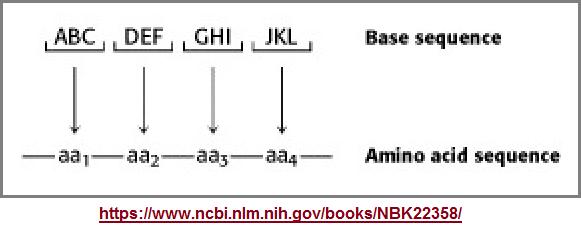 amino acids image 1