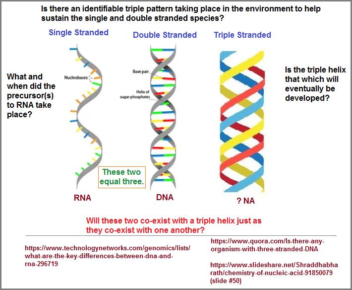 Single, double, triple helix development