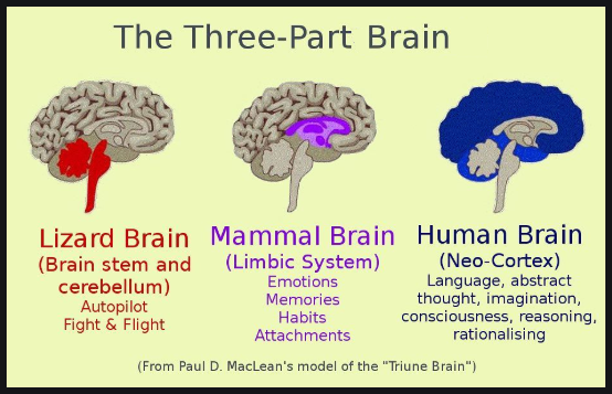 Three Part Brain