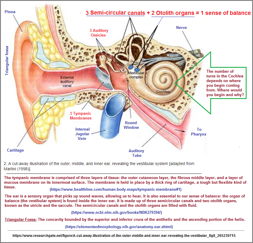 Descriptions of threes patterns in the ear