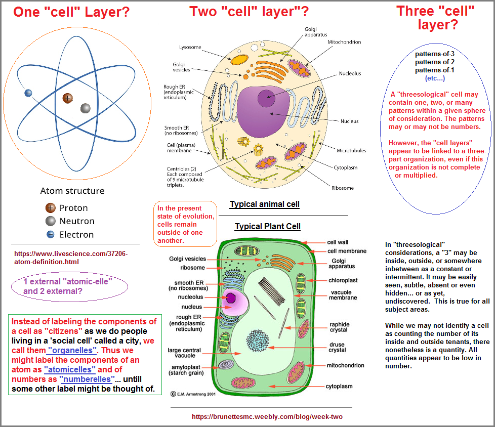 3 types of cell