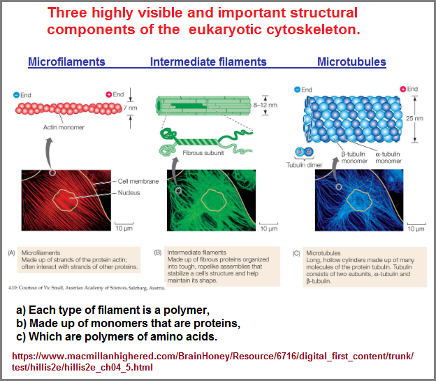 3 important structural components of cytoskeleton