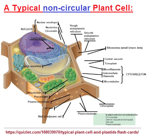 Typical plant cell image 1