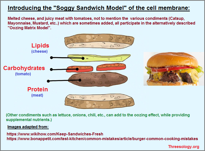 The Soggy Sandwich Model of the Cell