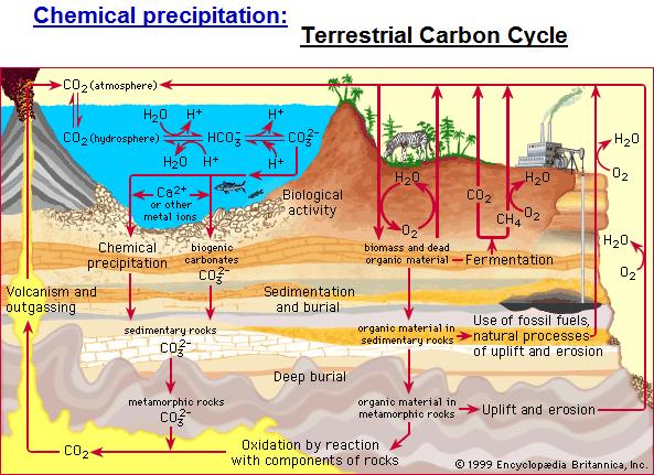 Terrestrial Carbon Cycle