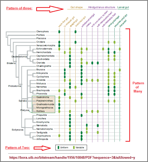 Gut architecture and hindgut types across animal lineages.