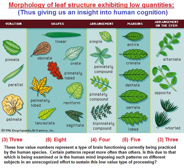 A taxonomic illustration of Leaf structure