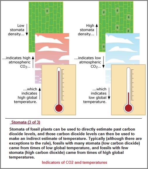 Stomata indicators of CO2 and temperatures description