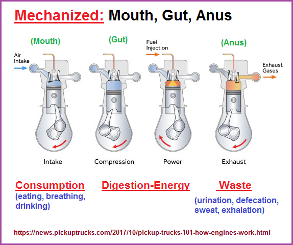 Mechanized mouth, gut, anus as seen in the internal combustion engine
