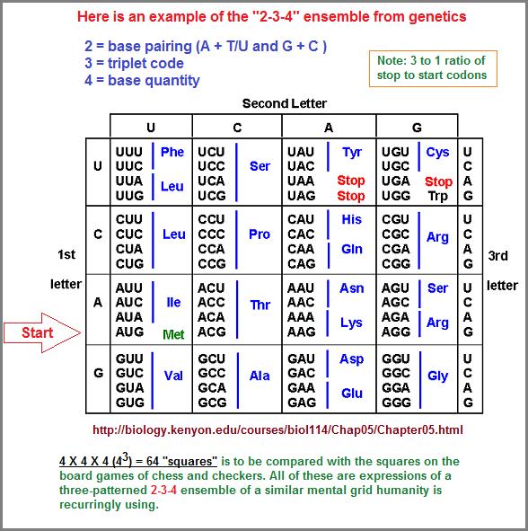 2-3-4 pattern in genetics