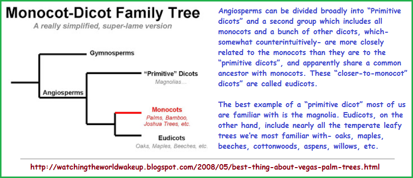 Monocot and Dicot family tree featuring Eudicots